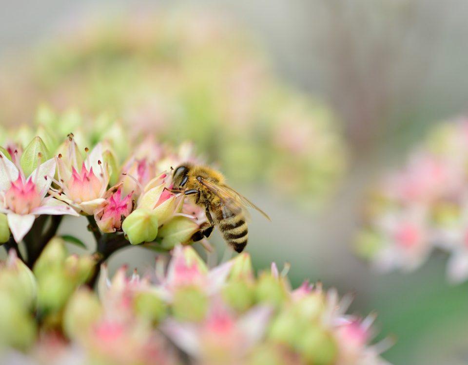 pszczoły ZRRT